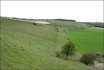Charlton Downs